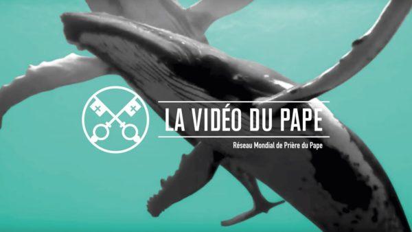 Protéger les océans – La Vidéo du Pape 9 – Septembre 2019